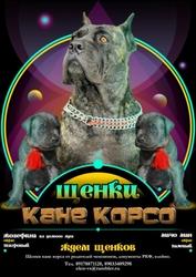 Ждем Щенков Кане Корсо