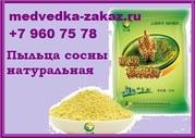 Пыльца сосны против туберкулеза